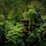 Беллависта: жизнь на деревьях