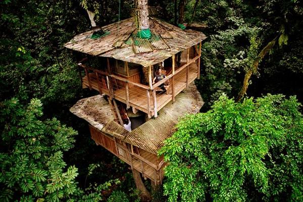 Tree_house_2014