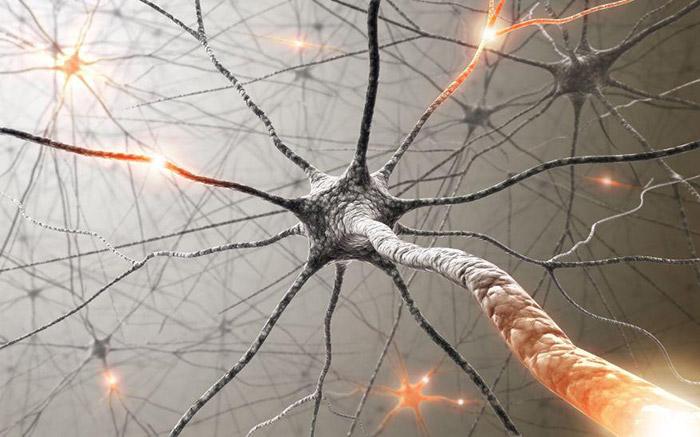zerkalnie_neironi