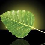 Зеленый лист и скальпель