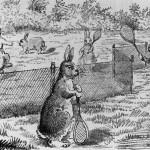 Почему кролики всегда побеждают
