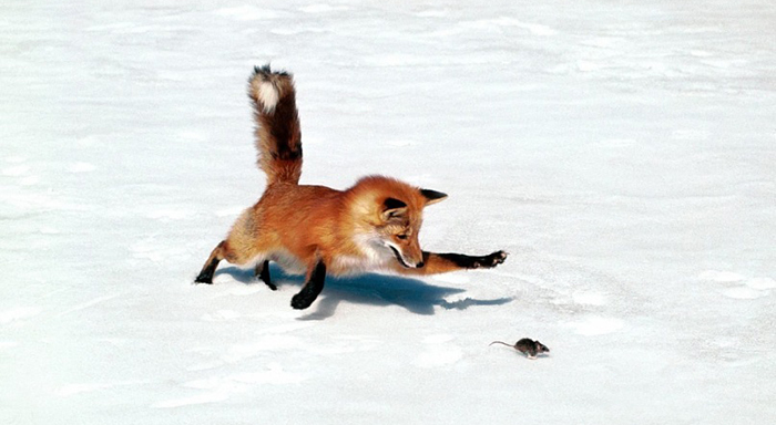Fox-and-the-Crow