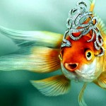 «Золотая Рыбка» под новым углом