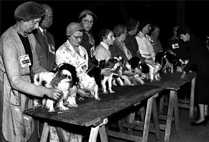 Первая выставка собак в ньюкасле