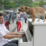 Он, пианино и собака