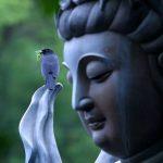 Будда, покидающий свой дом